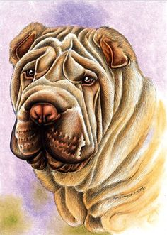 Animal Paintings, Animal Drawings, Dog Pencil Drawing, Pencil Art, Cachorros Shar Pei, Dog Rules, Skull Art, Dog Art, Pet Portraits