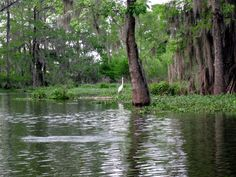 Pack & Paddle trip to Lake Martin - near Breaux Bridge, Louisiana