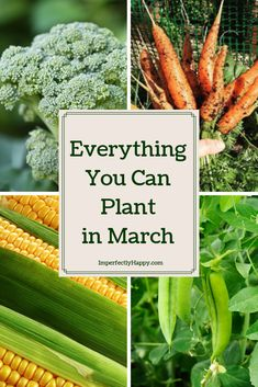 Gardening Vegetables Everything you can plant in March in your vegetable garden. - Spring is just around the corner but it isn't too early to think about the seeds you should plant in March! Get a start on your spring and summer garden. Vegetable Garden Planner, Raised Vegetable Gardens, Veg Garden, Edible Garden, Vegetable Gardening, Veggie Gardens, Easy Garden, Spring Vegetable Garden, Garden Types