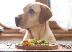 È fondamentale che il nostro cane consumi delle quantità di cibo equilibrate, ma è anche importante che all'interno della sua dieta siano presenti tutti i nutrienti di cui ha bisogno per mantenersi in forma.