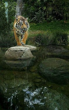 ********** - Pixdaus Wild Animals Photography, Wild Photography, Wildlife Photography, Angry Animals, Cute Animals, Beautiful Creatures, Animals Beautiful, Tiger Wallpaper, Cat Work