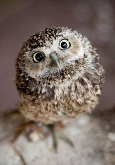 I don't know what it is about owls, they are just so cute for some reason. I'm sure you'd agree. C