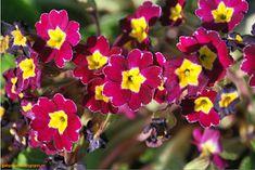 "Gaby's Worlld: Cum să fotografiezi ""primăvara"" Plants, Plant, Planets"