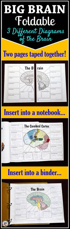There are three different BIG foldables of the brain (each made of two letter pages taped together). One shows internal brain structures, another shows the lobes of the brain and the third shows the important areas of the cortex. This large format provides: 1) enough room to record descriptions of all the functions of the parts 2) three clear diagrams to color 3) three fun foldables to use as all-in-one study guides for the brain. I drew each image in Adobe Illustrator to keep the lines…