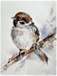 sparrow bird watercolour illustration