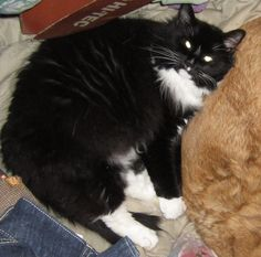 Mobile Home Park Hampton GA See More Cindy Girgenti CT Lost Pets MISSING CaT Frodo Missing Since Sunday August 30th
