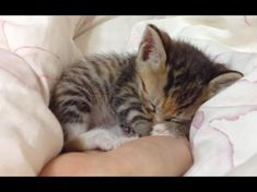 Compilation Of Kittens Sleeping In Hands - MUST WATCH! - iHeartCats.com #catandkittens