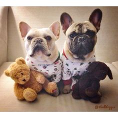 """""""You know when that Camera is turned off, we're gonna RIP these Jammie's and Teddy's Apart""""!! French Bulldogs."""