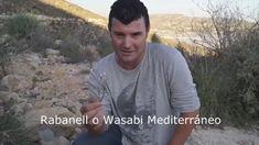 El Wasabi Mediterráneo. Plantas comestibles. Freelandcook.