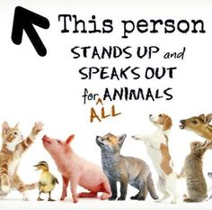 Go vegan. Take an active stand against the exploitation of animals. Learn reverence for All life. Speak out against every injustice associated with animal exploitation and irreverence for life.