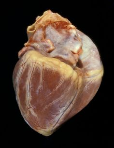 Childs Healthy Heart