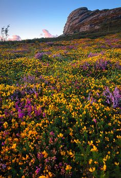 Haytor - a sea of colour | Flickr - Photo Sharing!