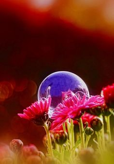bubbles by Kent Methiesen Power Photos, Bubble Balloons, Blowing Bubbles, Soap Bubbles, Simple Pleasures, Science And Nature, Amazing Flowers, Life Is Beautiful, Beautiful Things