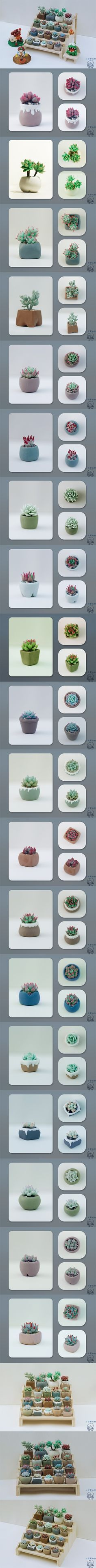 Succulent potted plants