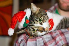 10 señales de que estás obsesionada con la Navidad