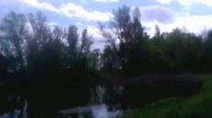 Okolice Lubiąża, jezioro, ptaki, przyroda