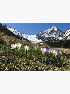 """Lüsens, Praxmar, Tirol, Frühling, Landschaft"" Maske von GlobalDesignIbk   Redbubble Mount Rainier, Mountains, Nature, Design, Travel, Hill Walking, Masks, Landscape, Naturaleza"