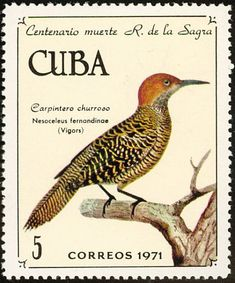 Fernandina's Flicker stamps - mainly images - gallery format Stamp Collecting, Postage Stamps, Around The Worlds, Birds, Gallery, Cuba, Corner, Collections, Image
