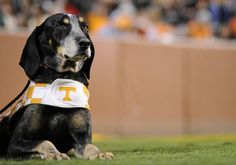 Best Mascot in the SEC, hands down. Smokey-University of Tennessee
