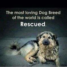 I love all dog breeds but rescued is my favorite breed! so many unwanted animals living in animal shelters, and its actually nice to adopt an older dog instead of a puppy since they are most likely house trained.