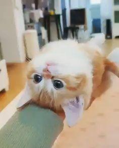 So cute 💜😍 – Kittens Pretty Animals, Cute Funny Animals, Cute Baby Animals, Animals And Pets, Funny Cats, Cute Kittens, Cats And Kittens, Cool Cats, I Love Cats