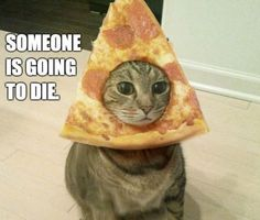 Pizza Cat is not amused. I will do this to my cat for Halloween