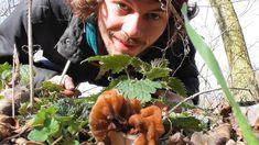 Pilze Und Wildkräuter Im März 2020 - Gute Lorcheln, Schlechte Lorcheln