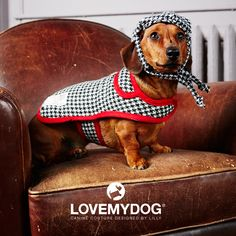 Murphy wears Ellesmere Collection coat and hat. Perfect for dashing merrily about town, this chic collection in monochrome tweed was inspired by starlet dogs photographed in Vogue magazine and is also available in dog collar, dog lead and pet carrier. Find out more here: http://www.lovemydog.co.uk/ellesmere.html #daxi #daschund #caninecouture