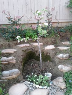 2013 Apple Tree and steps in progress