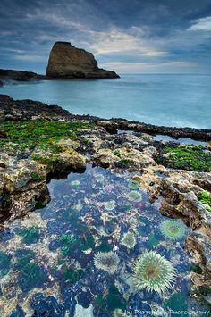 Tide Pool near Davenport, Santa Cruz, California