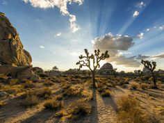 Le désert du Mojave (U.A, Californie) : Joshua Tree National Park The Places Youll Go, Places To See, California National Parks, Southern California, California Usa, The Perfect Getaway, Excursion, Rock Climbing, Day Trips