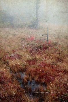 Cranberry Glades, Pocahontas County, West Virginia