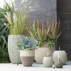Andre, Otter  Bruno Planters with Patterson Oil Lamps and mim Oil Lamps | Crate and Barrel