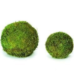 Decorative Moss Balls in many sizes. Love these on cake plates or fireplaces.  -DriedDecor.com #Mossballs #decorativeballs