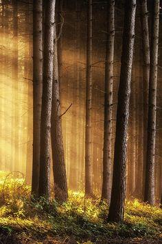 Martin Cocek, Magic forest