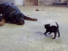 Wenn Hunde mit ihrem Futter spielen. ;) | Lustige Bilder, Sprüche, Witze, echt lustig