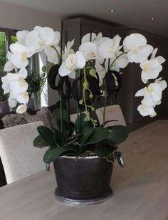 Orchids in Matt Black Wine Cooler