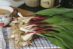 Ramps (Allium tricoccum) are a member of the lily family. It takes many years for a colony to become established, & they are threatened by overharvest in the wild.  #South #Southern #Appalachia