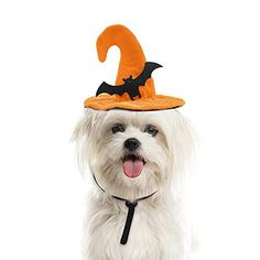 HALLOWEEN DESIGN – Using these accessories to dress up your cats and dogs, inviting your cute pet friends to take part in your festival parties, making them much closer to you. The interesting headdress is not only suitable for Halloween but also it can be applied for other occasions, such as photography, cosplay, party and so on. Halloween Witch Hat, Pet Halloween Costumes, Pet Costumes, Halloween Pumpkins, Halloween Party, Cat Pumpkin, Halloween Design, Funny Design, Festival Party