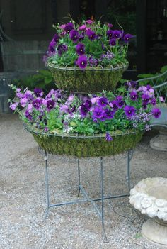 French wire basket with purple pansies.