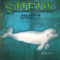 Shedd Aquarium baby Beluga Whale Chicago original illustration art on canvas 12 x 12 by stephen fowler. $80.00, via Etsy.