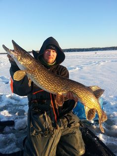 The pike up on the ice, before returning it to where it came from!