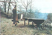 Always good stuff from motherearthnews.com: How to Butcher a Homestead-Raised Hog