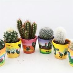 Cactus Starter Set - Fun and Colourful Decorative pots - ... https://www.amazon.co.uk/dp/B01B8065RC/ref=cm_sw_r_pi_dp_x_AifjybAV2QZGX