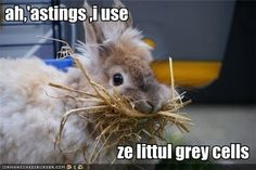 Poirot bunny @Carolyn Rafaelian Scott-Patterson @cheryl ng Scott