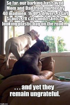 And from the other dogs in the neighborhood that want to take my place!