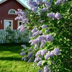 Mias Landliv: Four seasons in the garden