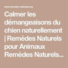 Calmer les démangeaisons du chien naturellement | Remèdes Naturels pour Animaux Remèdes Naturels pour Animaux