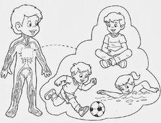 El aparato circulatorio para niños para colorear - Imagui Health Activities, Activities For Kids, My Themes, Science For Kids, Graphic Organizers, Classroom, Teaching, Education, Nature