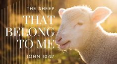Photo of lamb with message from John -- The sheep that belong to me listen to my voice. John 10 27, Hugot, Daily Bread, Christianity, Sheep, Lamb, The Voice, Branding, Brand Identity